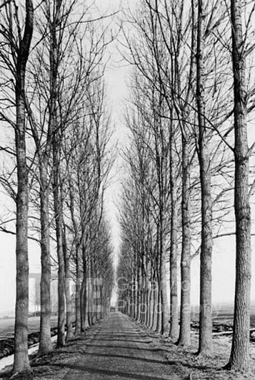 Alfred Eisenstaedt, Tree Lined Road, Delft, Holland 1978, Silver Gelatin Print