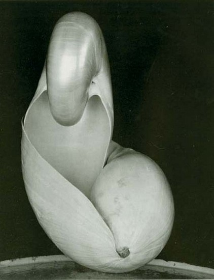 Edward, Weston, Shell 1927, Silver Gelatin Print